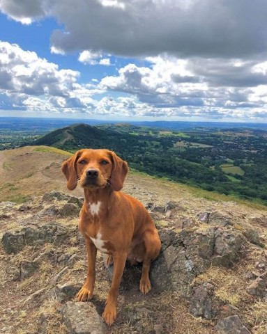 A dog sitting on top of the Malvern Hills.